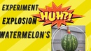 ЧТО БУДЕТ ЕСЛИ СУНУТЬ ПЕТАРДУ В АРБУЗ!WHAT WILL HAPPEN IF YOU PUT A FIRECRACKER IN A WATERMELON!