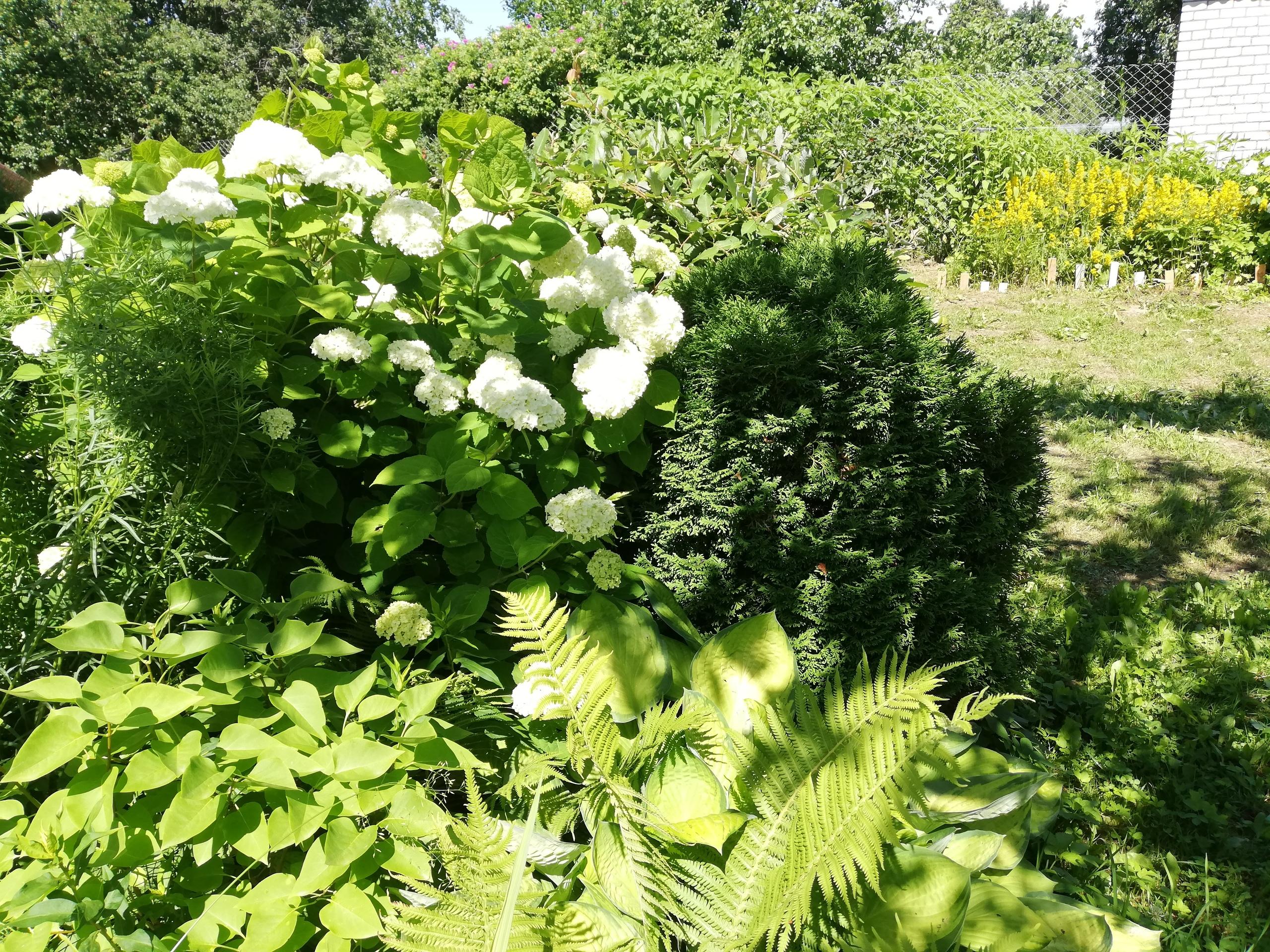 Цветы или огород - что выбрать дачнице? Дача,цветы,огород