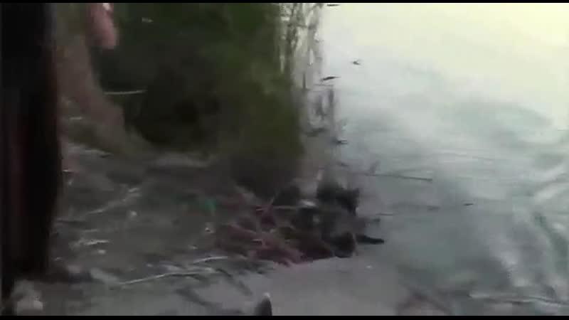 Video-971cdacc4a0f06d71f6e711a04c8072e-V.mp4