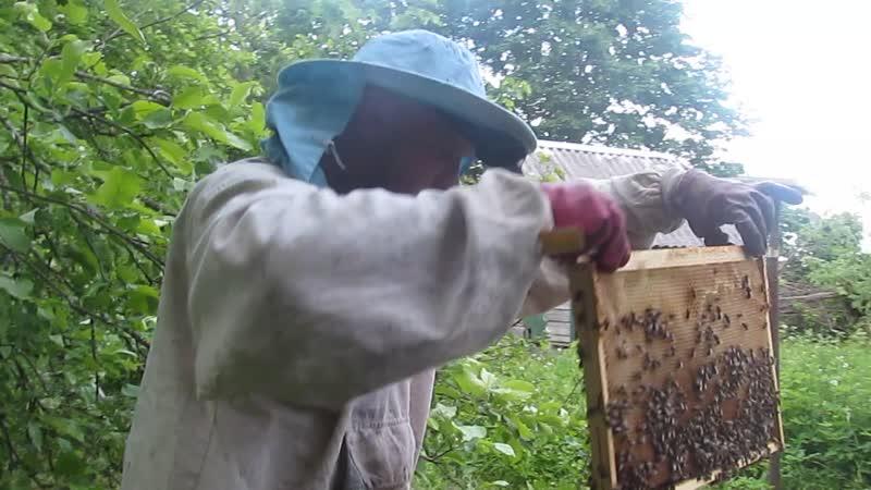 Проверяем как пчёлы отстроили рамки 1 июня 2019 года