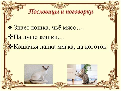 Урок доброты «Эти удивительные кошки», изображение №9
