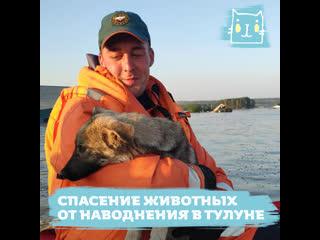 Спасение животных от наводнения в Иркутской области