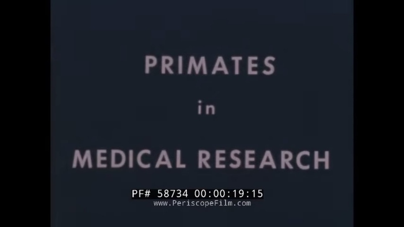 PRIMATES IN MEDICAL RESEARCH U S AIR FORCE SPACE FLIGHT TESTING OF CHIMPANZEE MONKEY 58734