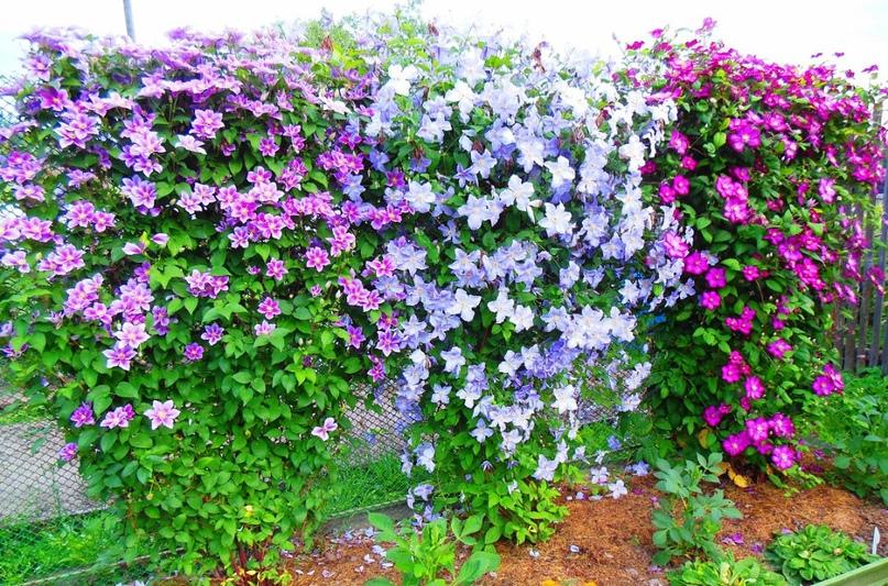 Раздолье для садоводов любителей
