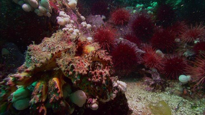 BBC Жизнь 10 серий из 10 Life 2009 Серия 08 Подводный мир Creatures of the Deep