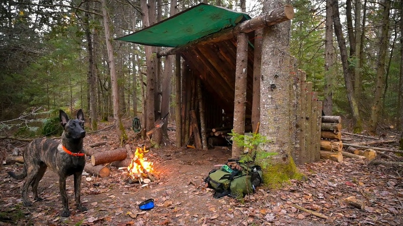 Building a Fort in the Woods with my Dog Leveling the Ground Trimming the Roof Steak on the Fire