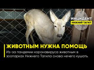 Из-за пандемии коронавируса животным в зоопарках Нижнего Тагила снова нечего кушать