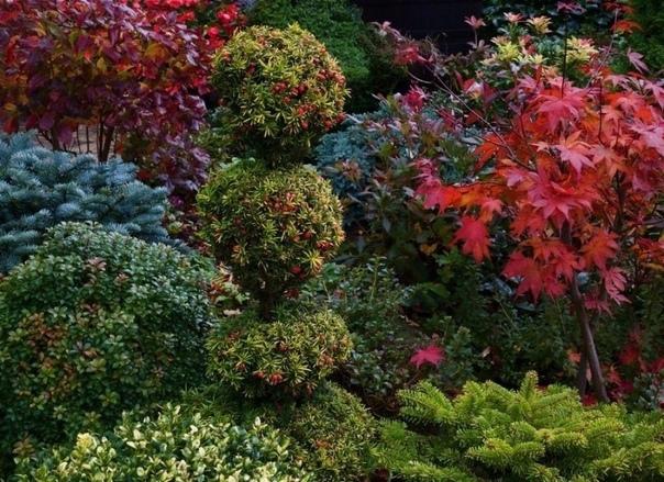 5 хвойных растений, которые идеально подойдут для вашего сада.