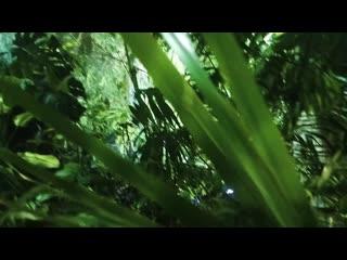 07.08 | bass jungle | ra