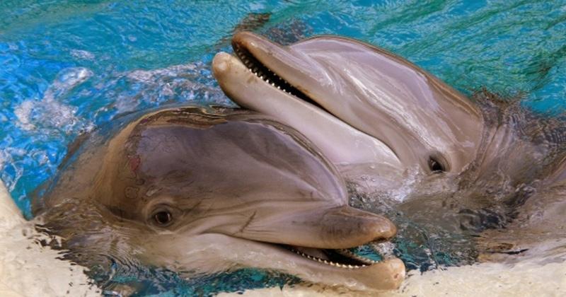 Так ли добры дельфины, изображение №1