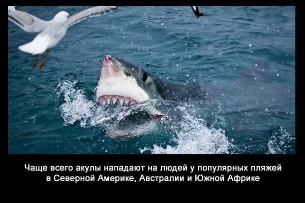 Valteya - Интересные факты о акулах / Хищники морей.(Видео. Фото) - Страница 2 T9pVtDn0pwU