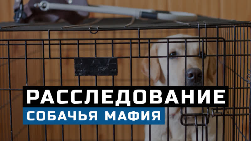 Собачья мафия в США. Кто наживается на породистых собаках. Щенки на продажу через интернет