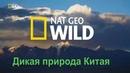 Nat Geo Wild Дикая природа Китая. Царство дикой природы Тибета / Chinas wild side
