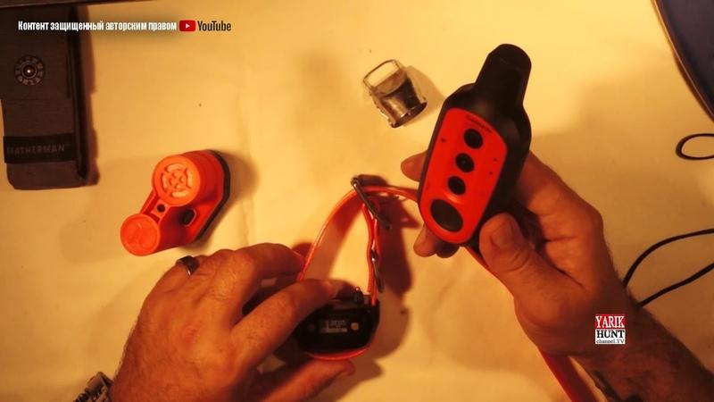 Бипер или колокольчик на легавую?Дратхаар Алька 4 месяца приучаем к электронному ошейнику....и еще!