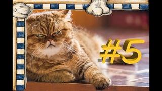 СМЕШНЫЕ КОТЫ Смешное видео про кошек, видео нарезка приколов 2021! выпуск #5