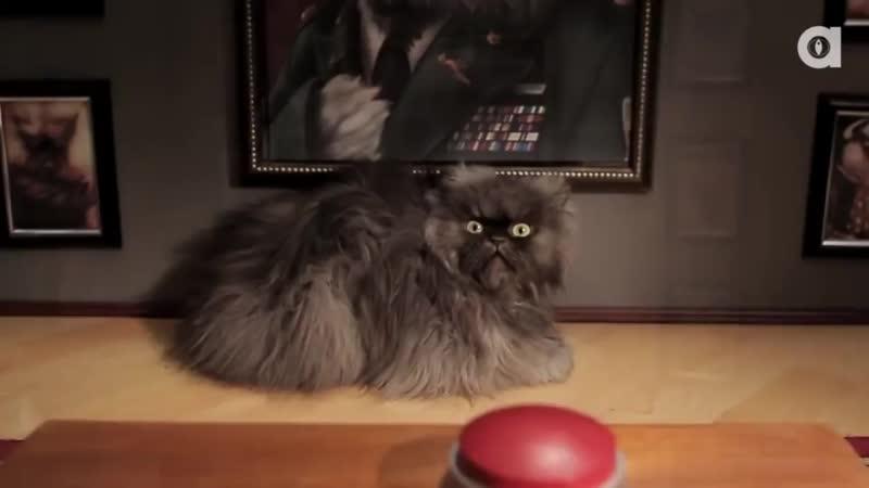 самый пушистый кот