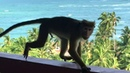 Funny monkeys. Sri Lanka 2019