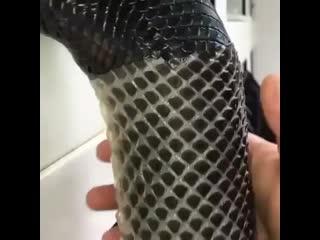 Asmr python