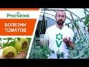 ОЧЕНЬ ПОЛЕЗНЫЙ ВЕБИНАР по болезням томатов Вопросы и ответы эксперта