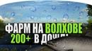 ЛОСОСЬ АТЛАНТИЧЕСКИЙ НА ВОЛХОВЕ ● РОЗЫГРЫШ ● Русская Рыбалка 4