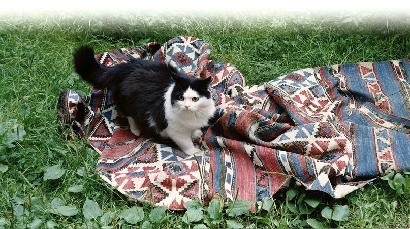Кавказский килим. Когда кошка царапает ковер – это предвещает приезд гостя.
