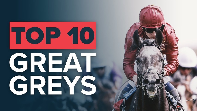 TOP 10 GREATEST GREY RACEHORSES: SILVER CHARM ROARING LION