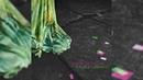 A Flor e o Espinho   Maria Bethânia