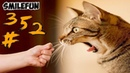КОШКИ 2020 ПРИКОЛЫ С КОШКАМИ 2020 Смешные Коты и Кошки Funny Cats