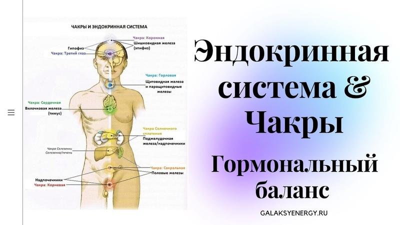 Здоровая эндокринная система Обмен веществ в норме Гормональный баланс Прилив сил и энергии