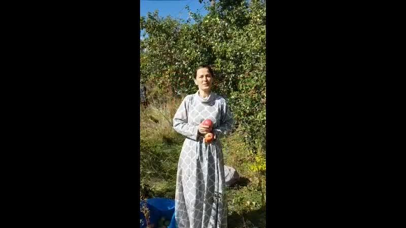 Яблоки Приглашение Сбор урожая Помочь яблоням Центр Доброе Имя Чебоксары 2020 mp4