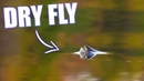 BEST DRY FLY TAKES Brown Trout Grayling Fly Fishing
