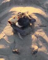 id_18744 Мечта на лето: валяться на пляже и есть вкусняшки 😊  #gif@bon