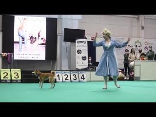 Выставка_кошек_и_собак_в_МВДЦ_Сибирь