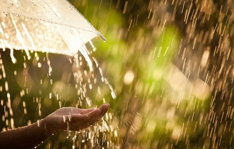 Зaпaх пocле дoждя являетcя cимбиoзoм члениcтoнoгих и микpoбoв