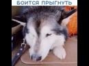 Лёд на Байкале настолько чистый, что собака боится на него прыгнуть