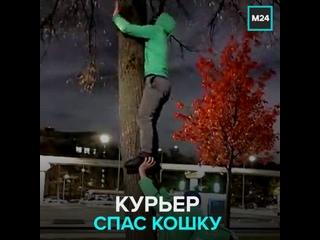 В Москве курьер снял с дерева сбежавшего кота — Москва 24