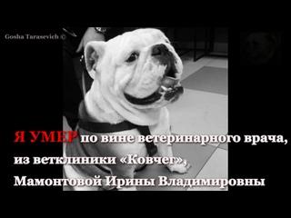 Мамонтова И.В. - ветеринарный врач, на совести которой гибель животного