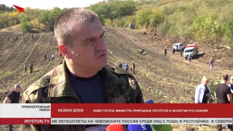 В Правобережном районе высадили 70 тысяч саженцев красного дуба