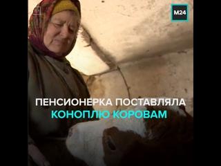 Пенсионерку из воронежского села будут судить за кормление коров коноплей — Москва 24