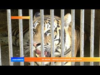 29 июля – Международный день тигра