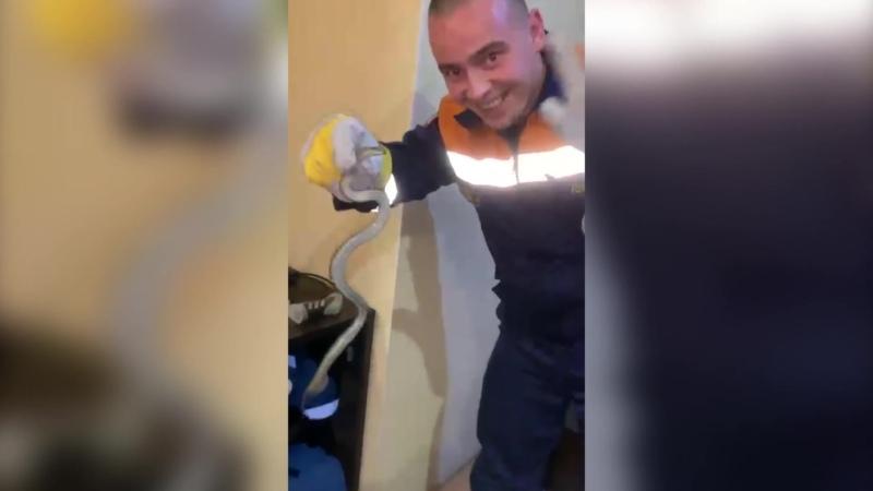 Коряжемские спасатели поймали змею