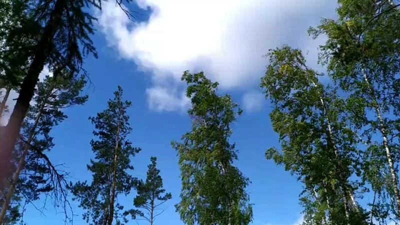 Тюлюк, лес