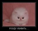Денис Компаниц, 19 лет, Нефтеюганск, Россия
