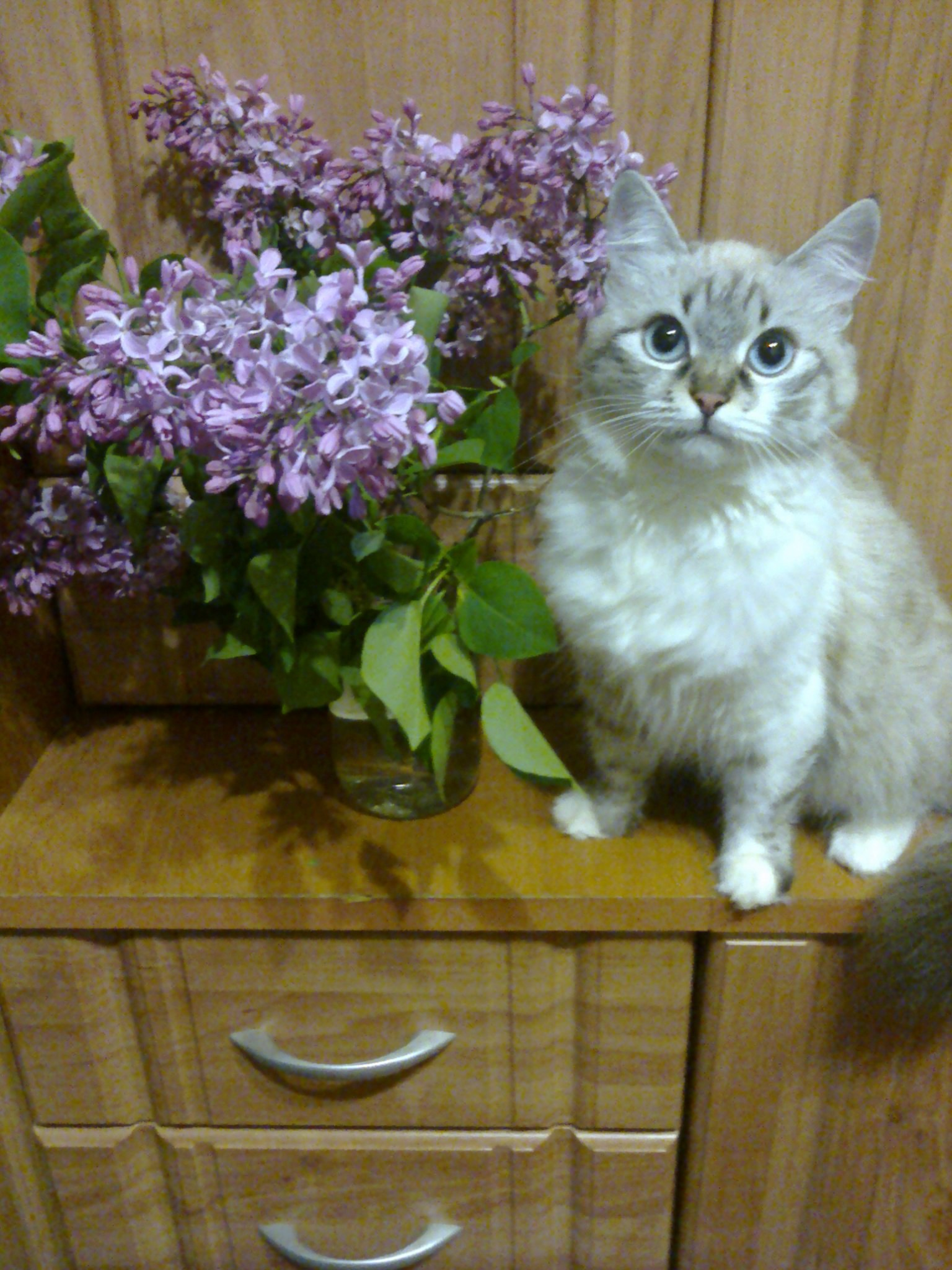 Виктория, 38, Bataysk