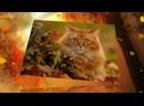 2. Осень - кошка в рыжих сапогах - В.Сюткин