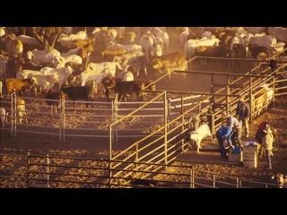 """Часть 13. """"ТЕРРА"""" (лат. - Земля) - документальный фильм о неисчерпаемом разнообразии жизни на планете."""