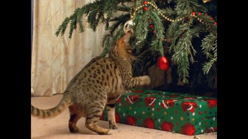 Загадочные кошки The Cat Connection BBC 2002