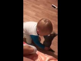 Малыш vs котэ - бои без правил )