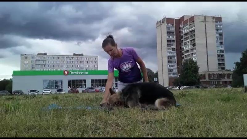 Видео от бегу с собакой