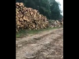 Vídeo de Elena Kazimir